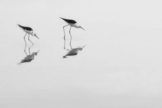 Water_birds