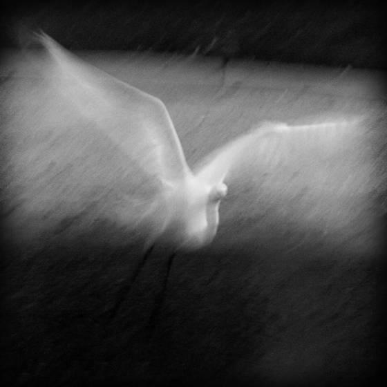 Taking_wing