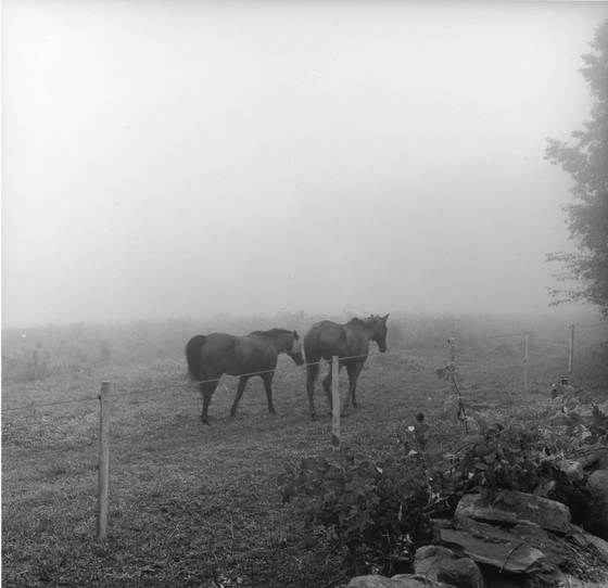Horses__2