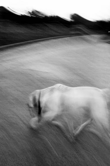 Entering_dog