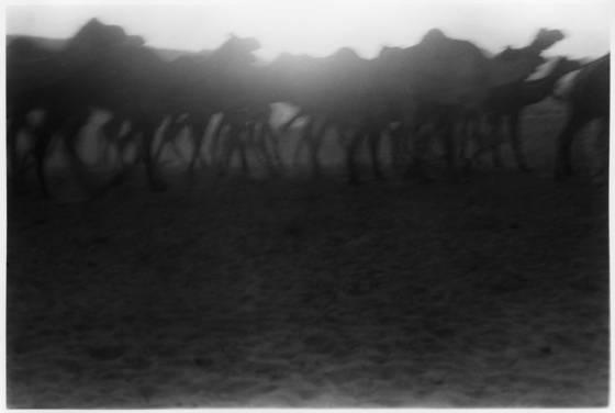 Desert_dreams