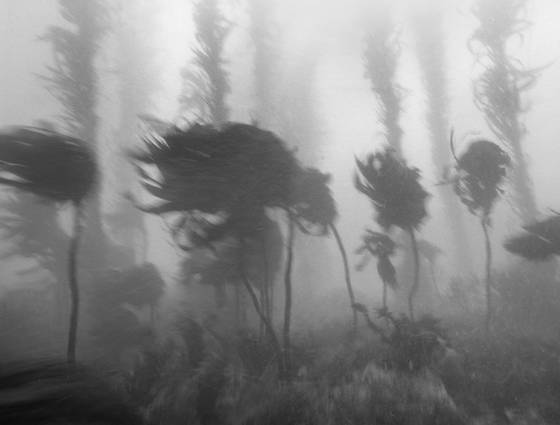 Kelp_forest_time_study