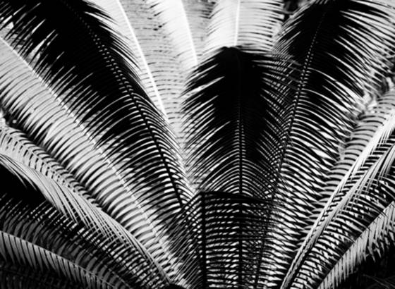 Botanicals_7