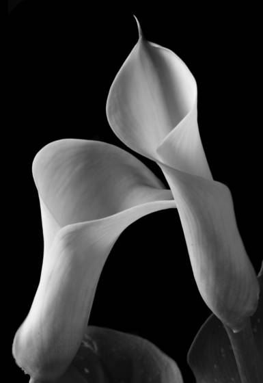 Two_callas_close_up