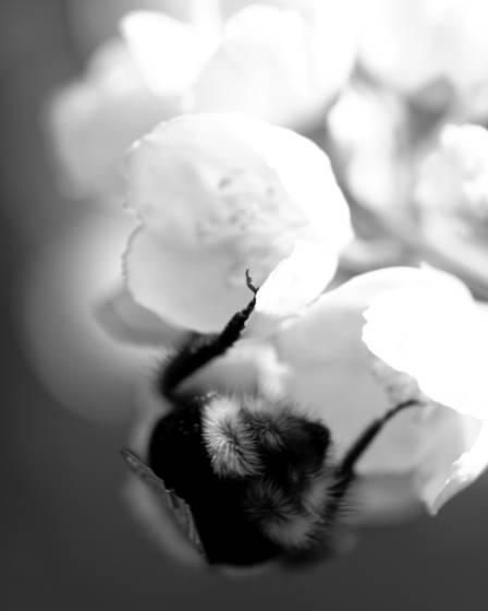 Bee_worker