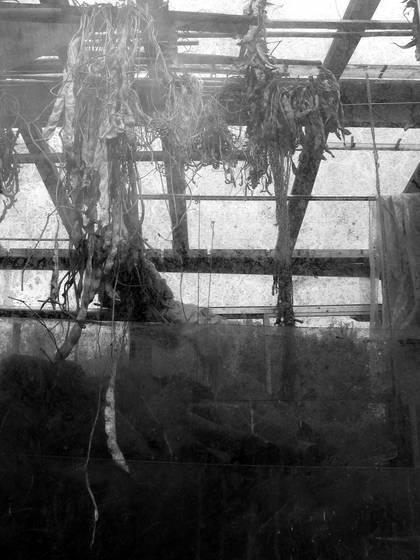 Greenhouse_02