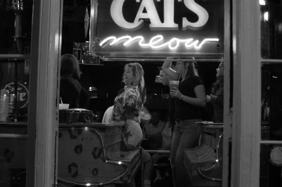 Cats_meow