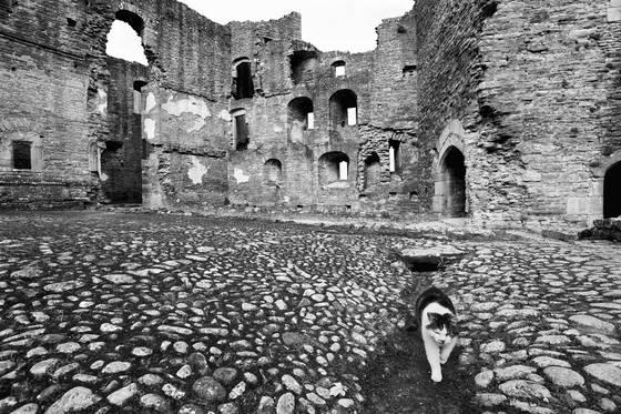 Castle_cat