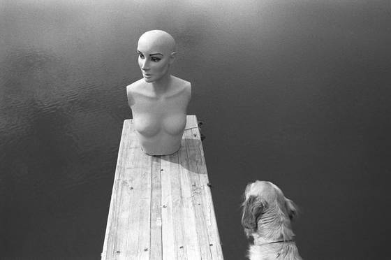 Mannequin_dog_lake