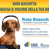 Bassotto Volume 2