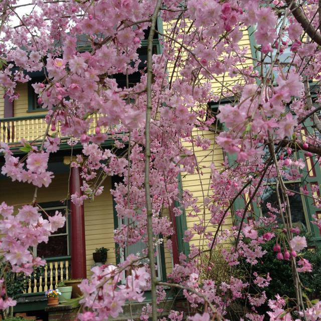 Finally, Springtime