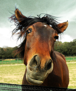 Funny-animal-funny-horse-pictures-with-captions-26-50-funny-horse-pictures-with-captions