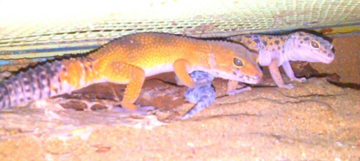Basondo, Refugio de Fauna Urdaibai