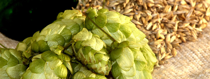 5_wobap_hops%20and%20stuff_688x258