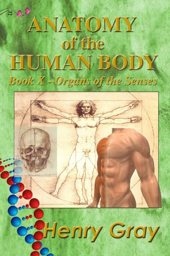 Anatomy of the human body gray