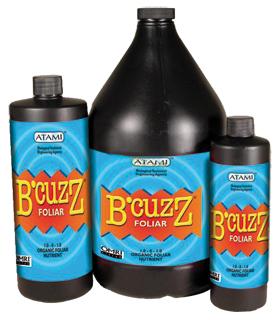 BZFL32