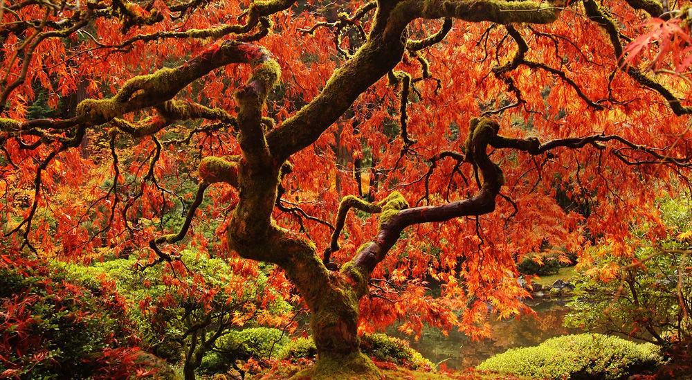 Beautifulnow is beautiful now 10 beautiful specimen for Specimen trees