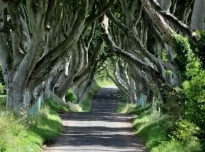 Dark Hedges Irlanda