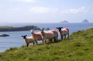 Valentia Island. Ireland Tourism