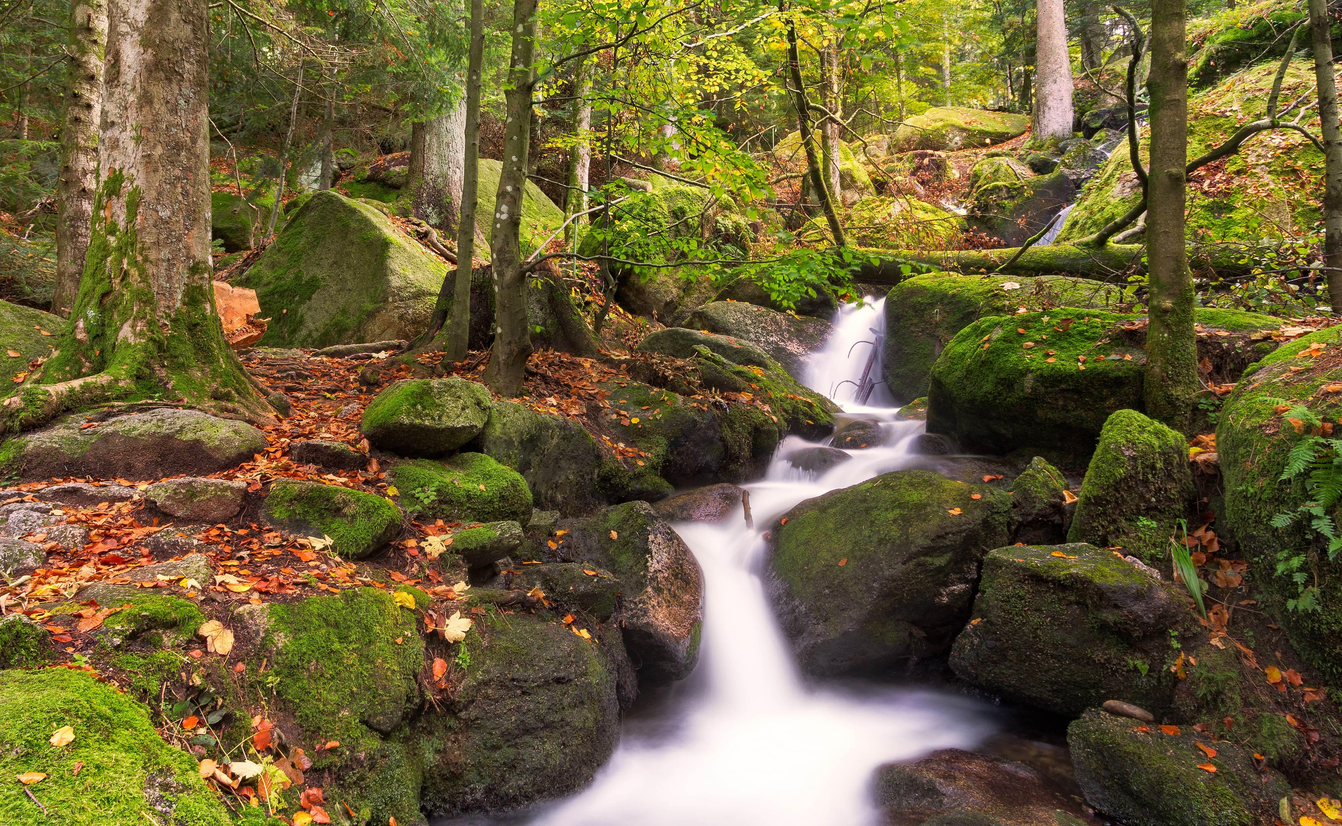 Cascadas de Gertelsbacher, Selva Negra