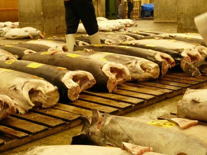 Subasta Atún Mercado de Tsukiji