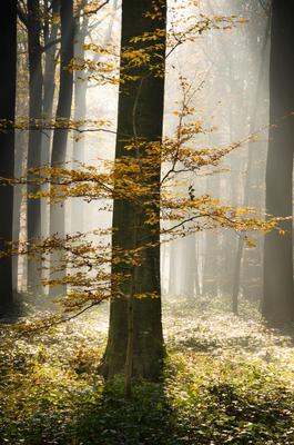 Zoniën woud