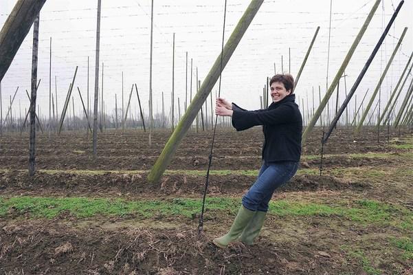hops, Poperinge, visit Poperinge, visit belgium, West Flanders, belgian beer