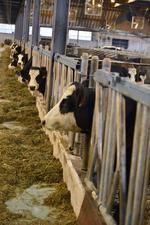 Westmalle Dairy
