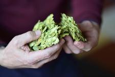 Brouwerij Westmalle, Hops, Jan Adriaensen