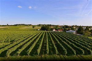 Cognac, Chimay Grande Réserve Vieillie en Barriques 2016