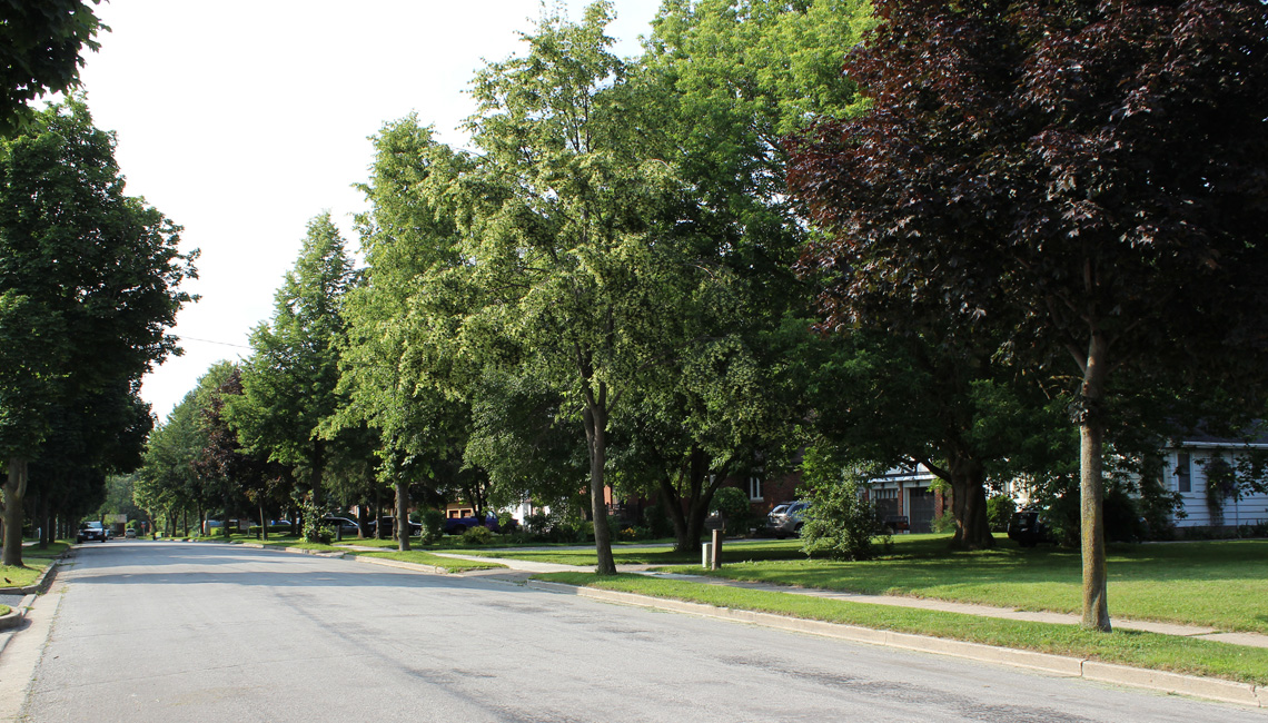 Tree Lined Streets of Stanley Park