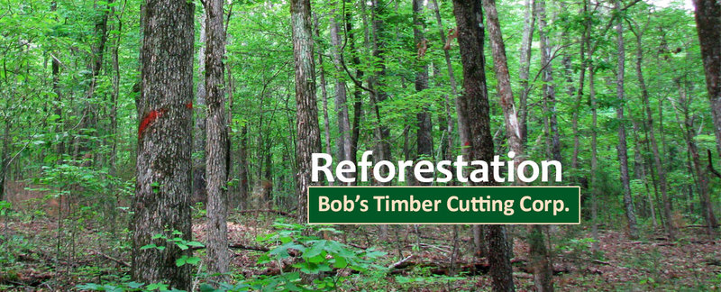 Bob's Timber Cutting Corp. Offers Forestry Service in Oregon City, OR