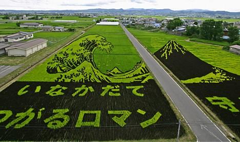 Rice_art