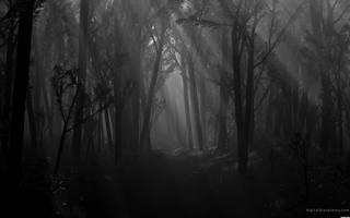 1305670599-black-trees-dark-forest-path-shadows-spooky-monochrome-wallpaper-wallpaper