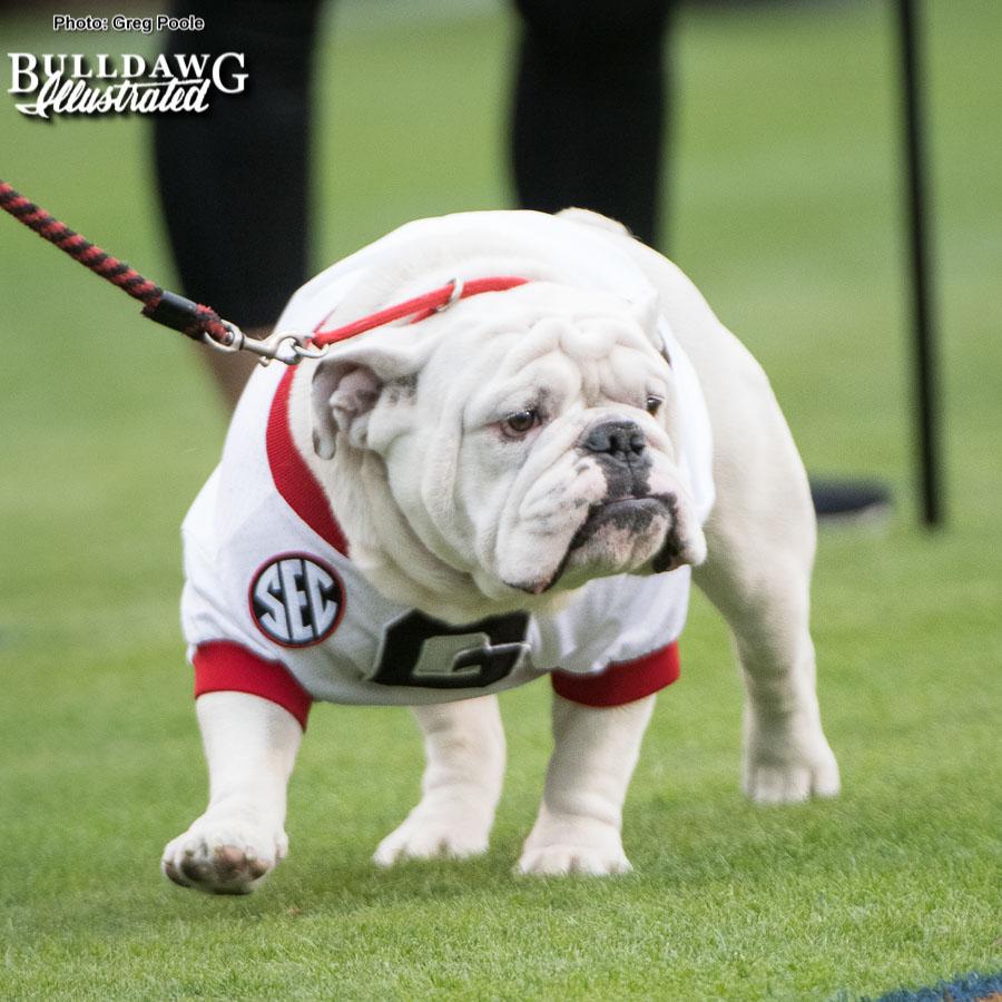 Georgia's Bulldog mascot Uga X - UGA vs. Auburn, Sat., Nov. 11, 2017 -