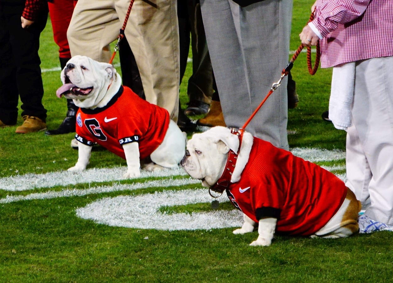 (Left) Que - Uga X, (Right) Russ - Uga IX, Collaring Ceremony on 21-Nov-2015, (Photo by Bulldawg Illustrated's Greg Poole)
