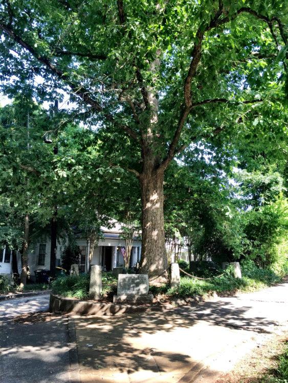 the-tree-that-owns-itself-1-credit-visitathensgadotcom