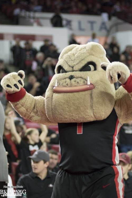 Hairy Dawg representing at a Georgia men's basketball home game in the Stege