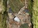 Nest (July)