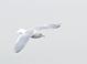 "Iceland (""Kumlien's"") Gull (adult), Jan. 22, 2011, Belmar, NJ Pelagic"