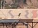 Costa's Hummingbird, Wetlands Park, Las Vegas, 12-28-2011