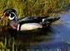 Wood Duck drake. North Slough. Coos bay, Oregon  5-11-06