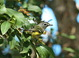 I never miss the chance to study and photograph Blue-headed Vireos. This bird, seen at the South Padre Convention Center on the last day of our trip (11 November 2013), was particularly cooperative.