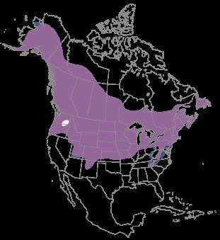 Blackcapped Chickadee BirdFellow Social Field Guide