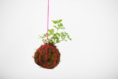 Kokedama photo listing