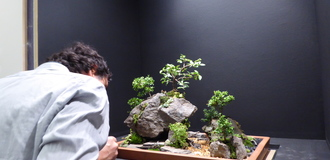 Mini bonsai landscape1 listing