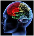 The High Cost Of Neuromyths In Education >> The High Cost Of Neuromyths In Education