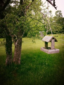 Beautiful bird house at Blodgett