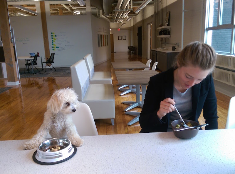 Related story: Dogs of design agencies.
