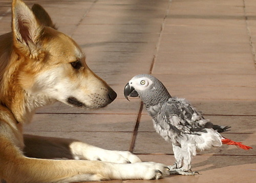 Dog looking at a parrot